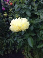 More lovely flowers