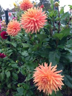 lovely flowers in Elizabeth Park