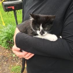 kitten fan!