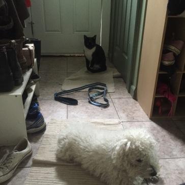 no one seems to like the leash